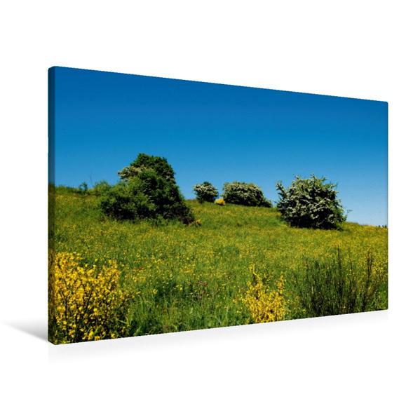Premium Textil-Leinwand 90 cm x 60 cm quer, Blumenwiese im Frühling | Wandbild, Bild auf Keilrahmen, Fertigbild auf echter Leinwand, Leinwanddruck - Coverbild