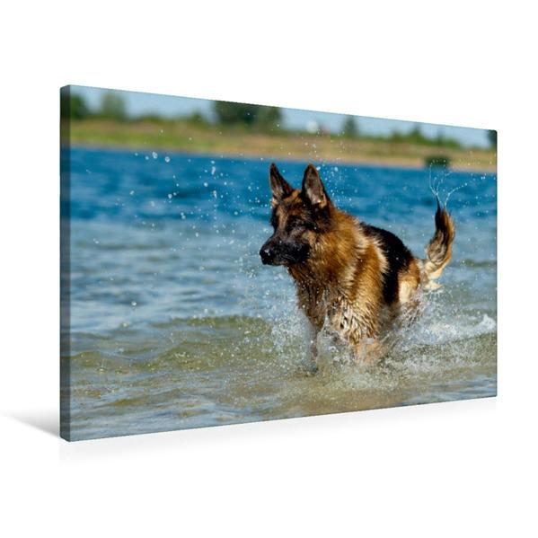 Premium Textil-Leinwand 75 cm x 50 cm quer, Deutscher Schäferhund | Wandbild, Bild auf Keilrahmen, Fertigbild auf echter Leinwand, Leinwanddruck - Coverbild