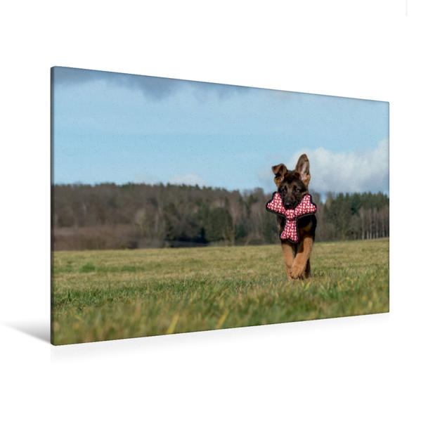 Premium Textil-Leinwand 120 cm x 80 cm quer, Deutscher Schäferhund Yack | Wandbild, Bild auf Keilrahmen, Fertigbild auf echter Leinwand, Leinwanddruck - Coverbild