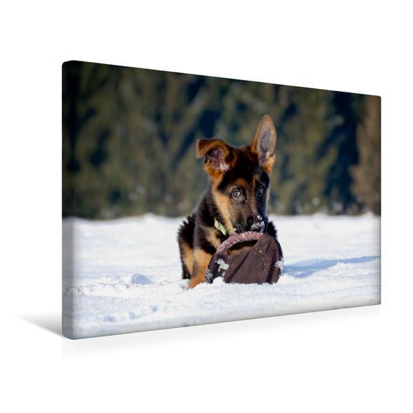 Premium Textil-Leinwand 45 cm x 30 cm quer, Deutscher Schäferhundwelpe | Wandbild, Bild auf Keilrahmen, Fertigbild auf echter Leinwand, Leinwanddruck - Coverbild
