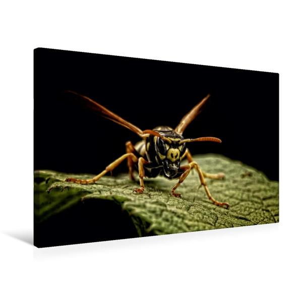 Premium Textil-Leinwand 75 cm x 50 cm quer, Ein Motiv aus dem Kalender Kleine Krabbeltiere mal ganz groß | Wandbild, Bild auf Keilrahmen, Fertigbild auf echter Leinwand, Leinwanddruck - Coverbild