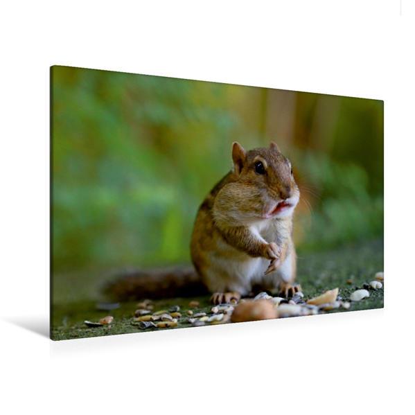 Premium Textil-Leinwand 120 cm x 80 cm quer, Streifenhörnchen | Wandbild, Bild auf Keilrahmen, Fertigbild auf echter Leinwand, Leinwanddruck - Coverbild