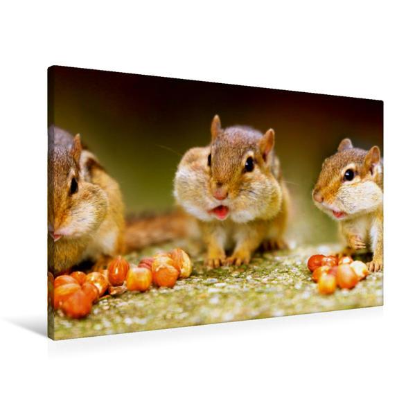 Premium Textil-Leinwand 90 cm x 60 cm quer, Streifenhörnchen | Wandbild, Bild auf Keilrahmen, Fertigbild auf echter Leinwand, Leinwanddruck - Coverbild