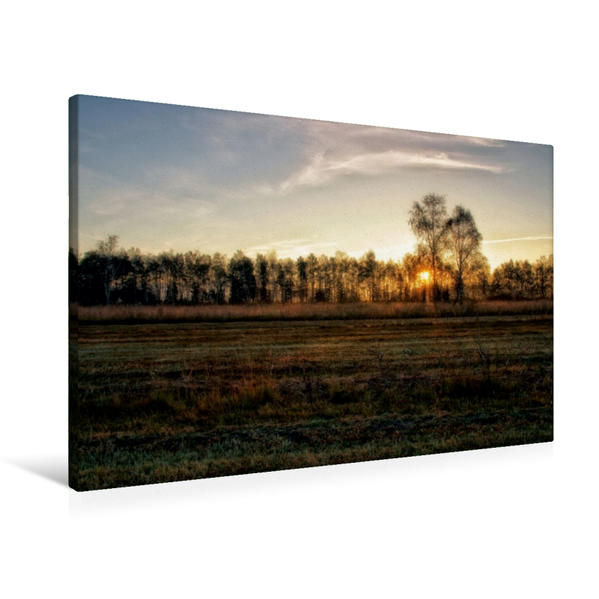 Premium Textil-Leinwand 90 cm x 60 cm quer, Rohrspitz   Wandbild, Bild auf Keilrahmen, Fertigbild auf echter Leinwand, Leinwanddruck - Coverbild
