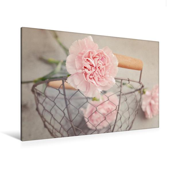 Premium Textil-Leinwand 120 cm x 80 cm quer, Nelke | Wandbild, Bild auf Keilrahmen, Fertigbild auf echter Leinwand, Leinwanddruck - Coverbild