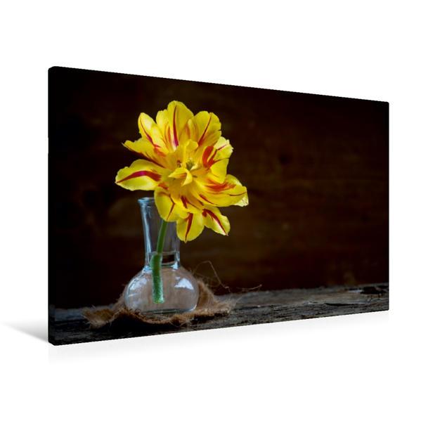 Premium Textil-Leinwand 90 cm x 60 cm quer, Tulpe   Wandbild, Bild auf Keilrahmen, Fertigbild auf echter Leinwand, Leinwanddruck - Coverbild