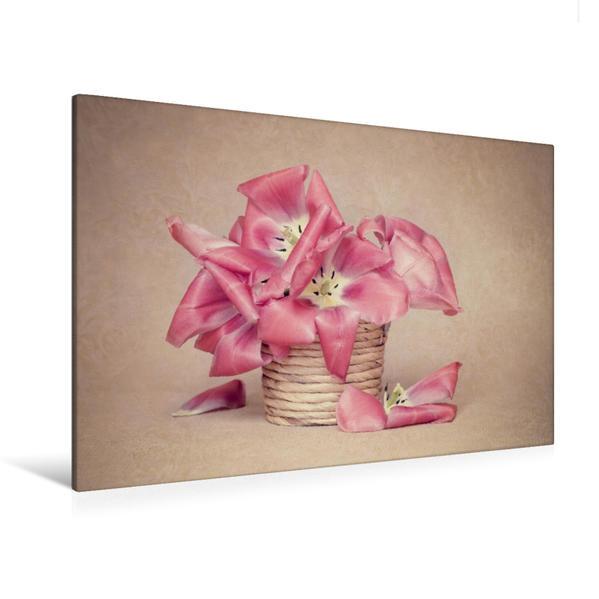Premium Textil-Leinwand 120 cm x 80 cm quer, Tulpen | Wandbild, Bild auf Keilrahmen, Fertigbild auf echter Leinwand, Leinwanddruck - Coverbild