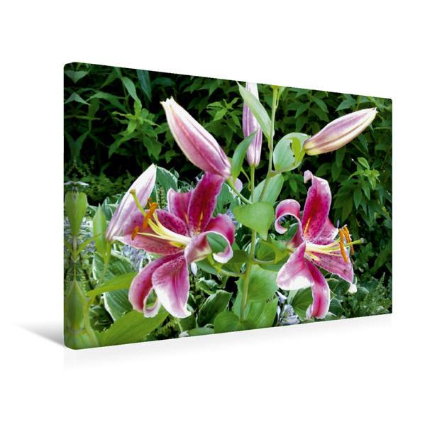 Premium Textil-Leinwand 45 cm x 30 cm quer, Lilie | Wandbild, Bild auf Keilrahmen, Fertigbild auf echter Leinwand, Leinwanddruck - Coverbild