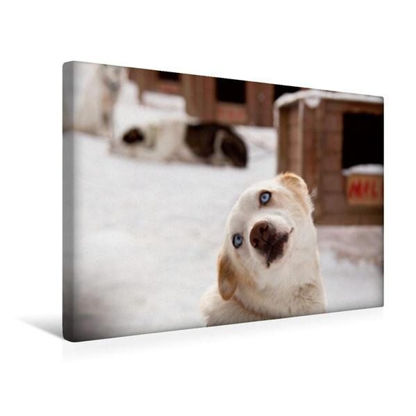 Premium Textil-Leinwand 45 cm x 30 cm quer, Hallo! | Wandbild, Bild auf Keilrahmen, Fertigbild auf echter Leinwand, Leinwanddruck - Coverbild