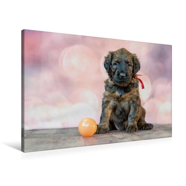 Premium Textil-Leinwand 90 cm x 60 cm quer, Briard-Welpe mit Ball | Wandbild, Bild auf Keilrahmen, Fertigbild auf echter Leinwand, Leinwanddruck - Coverbild