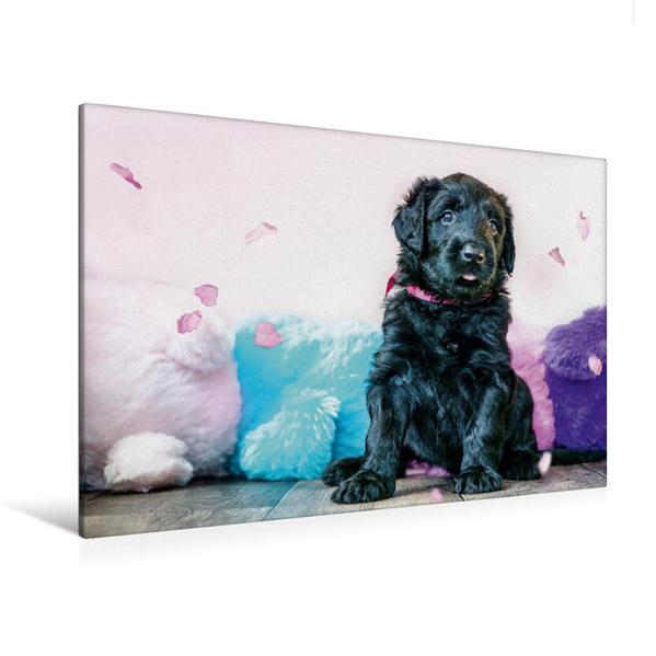 Premium Textil-Leinwand 120 cm x 80 cm quer, Briard-Welpe | Wandbild, Bild auf Keilrahmen, Fertigbild auf echter Leinwand, Leinwanddruck - Coverbild