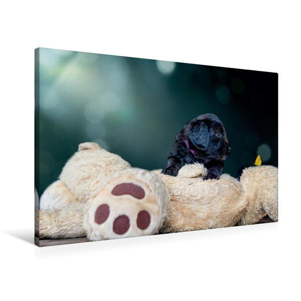Premium Textil-Leinwand 90 cm x 60 cm quer, Briard-Welpe entdeckt Schmetterling | Wandbild, Bild auf Keilrahmen, Fertigbild auf echter Leinwand, Leinwanddruck - Coverbild