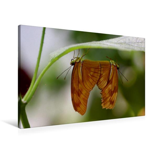 Premium Textil-Leinwand 90 cm x 60 cm quer, Schmetterlingspaarung | Wandbild, Bild auf Keilrahmen, Fertigbild auf echter Leinwand, Leinwanddruck - Coverbild