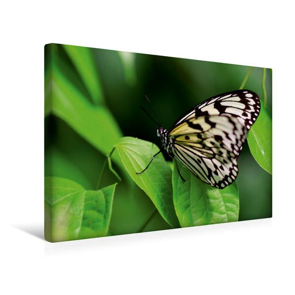 Premium Textil-Leinwand 45 cm x 30 cm quer, weiße Baumnymphe | Wandbild, Bild auf Keilrahmen, Fertigbild auf echter Leinwand, Leinwanddruck - Coverbild