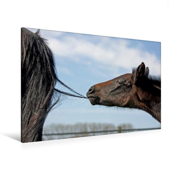 Premium Textil-Leinwand 120 cm x 80 cm quer, Fohlen - für jeden Spaß zu haben | Wandbild, Bild auf Keilrahmen, Fertigbild auf echter Leinwand, Leinwanddruck - Coverbild