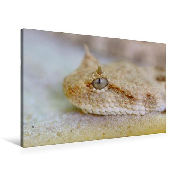 Premium Textil-Leinwand 90 cm x 60 cm quer, Hornviper | Wandbild, Bild auf Keilrahmen, Fertigbild auf echter Leinwand, Leinwanddruck - Coverbild