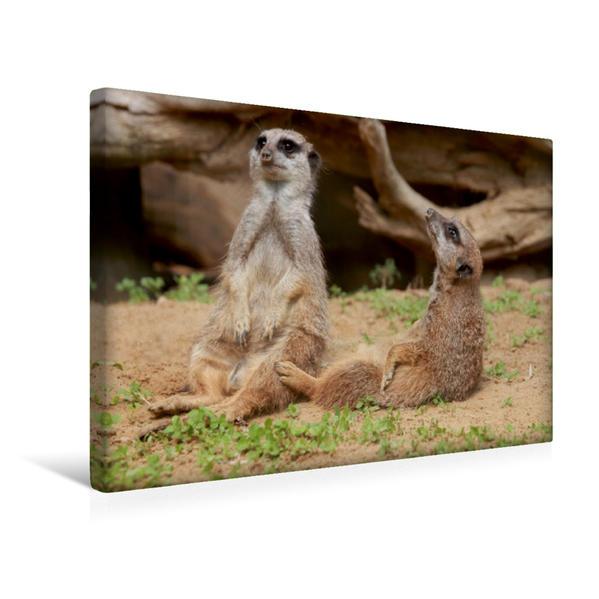 Premium Textil-Leinwand 45 cm x 30 cm quer, Ein Motiv aus dem Kalender Erdmännchen Familienbande | Wandbild, Bild auf Keilrahmen, Fertigbild auf echter Leinwand, Leinwanddruck - Coverbild