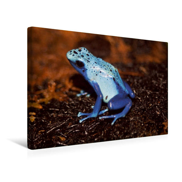 Premium Textil-Leinwand 45 cm x 30 cm quer, Ein Motiv aus dem Kalender Pfeilgiftfrösche | Wandbild, Bild auf Keilrahmen, Fertigbild auf echter Leinwand, Leinwanddruck - Coverbild