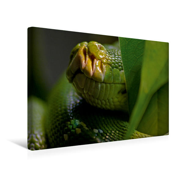 Premium Textil-Leinwand 45 cm x 30 cm quer, Ein Motiv aus dem Kalender Schlangen im Portrait | Wandbild, Bild auf Keilrahmen, Fertigbild auf echter Leinwand, Leinwanddruck - Coverbild
