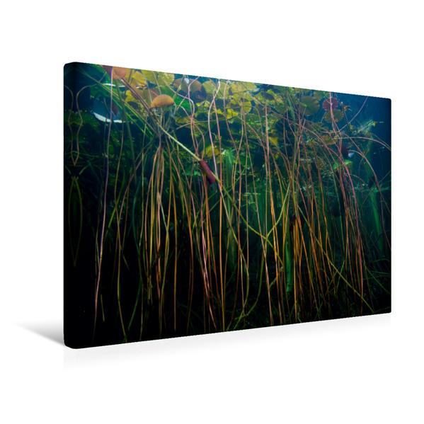 Premium Textil-Leinwand 45 cm x 30 cm quer, Seerose, Forellensee | Wandbild, Bild auf Keilrahmen, Fertigbild auf echter Leinwand, Leinwanddruck - Coverbild