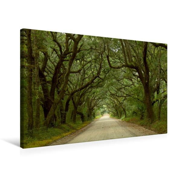 Premium Textil-Leinwand 75 cm x 50 cm quer, Oak Alley, Botany Bay, Ediston Island, South Carolina, USA | Wandbild, Bild auf Keilrahmen, Fertigbild auf echter Leinwand, Leinwanddruck - Coverbild