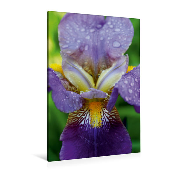 Premium Textil-Leinwand 80 cm x 120 cm  hoch, Traumhafte Iris Blüte | Wandbild, Bild auf Keilrahmen, Fertigbild auf echter Leinwand, Leinwanddruck - Coverbild