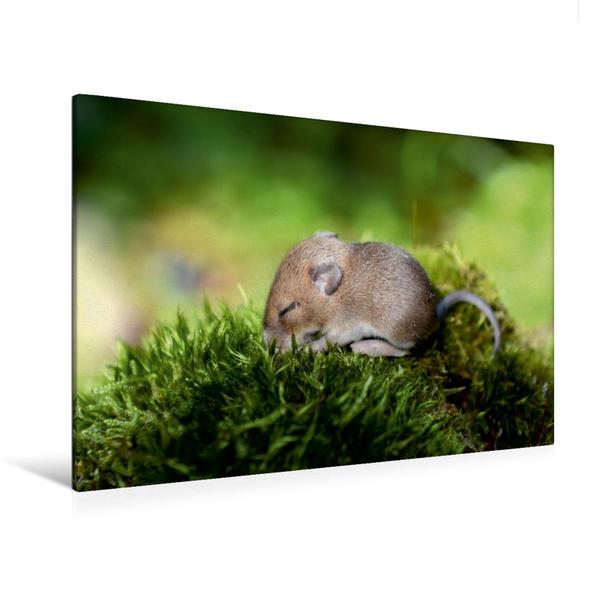 Premium Textil-Leinwand 120 cm x 80 cm quer, Ein Motiv aus dem Kalender ... hier kommt die Maus ... | Wandbild, Bild auf Keilrahmen, Fertigbild auf echter Leinwand, Leinwanddruck - Coverbild