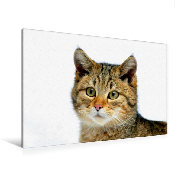 Premium Textil-Leinwand 120 cm x 80 cm quer, Wildkatze | Wandbild, Bild auf Keilrahmen, Fertigbild auf echter Leinwand, Leinwanddruck - Coverbild