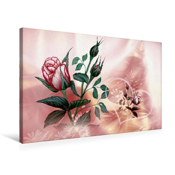 Premium Textil-Leinwand 75 cm x 50 cm quer, Rose   Wandbild, Bild auf Keilrahmen, Fertigbild auf echter Leinwand, Leinwanddruck - Coverbild
