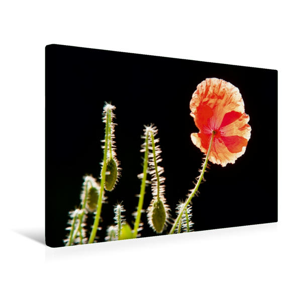 Premium Textil-Leinwand 45 cm x 30 cm quer, Mohnblumen - rote Schönheiten | Wandbild, Bild auf Keilrahmen, Fertigbild auf echter Leinwand, Leinwanddruck - Coverbild