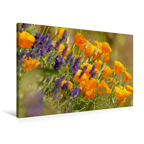 Premium Textil-Leinwand 90 cm x 60 cm quer, Lavendel und Goldmohn | Wandbild, Bild auf Keilrahmen, Fertigbild auf echter Leinwand, Leinwanddruck - Coverbild