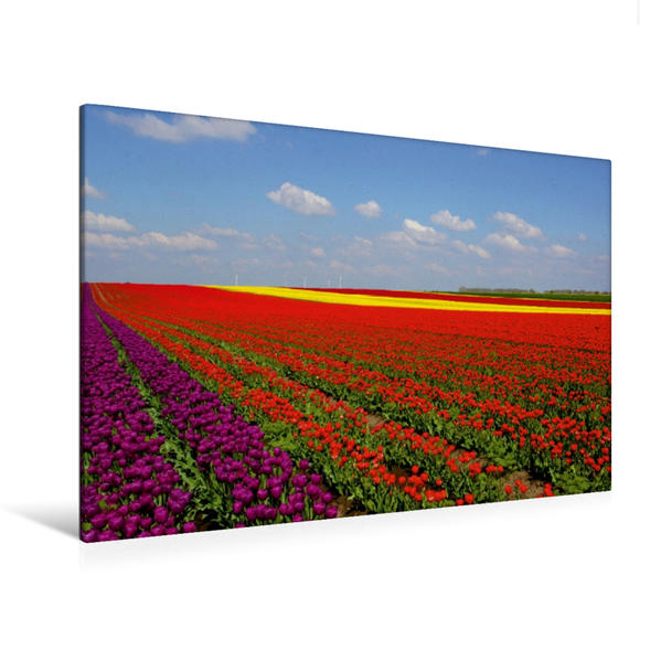 Premium Textil-Leinwand 120 cm x 80 cm quer, Tulpenfelder am Stadtrand   Wandbild, Bild auf Keilrahmen, Fertigbild auf echter Leinwand, Leinwanddruck - Coverbild