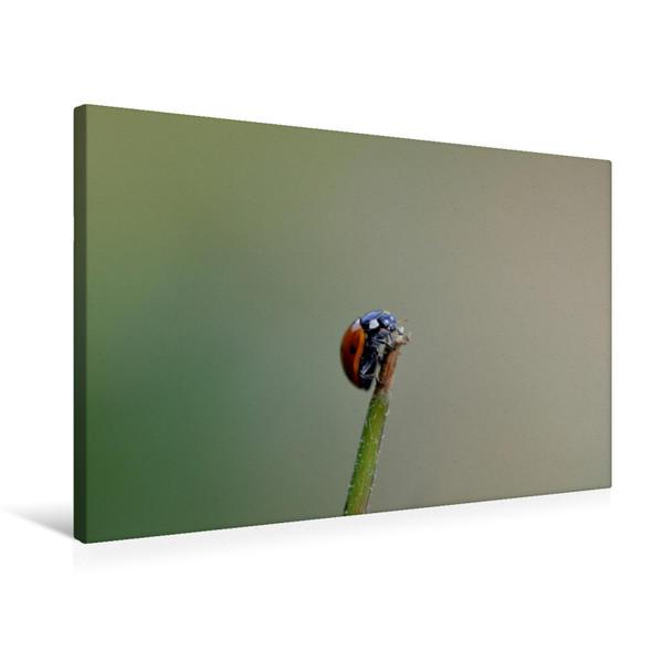 Premium Textil-Leinwand 75 cm x 50 cm quer, Ein Motiv aus dem Kalender Kleine Glücksboten | Wandbild, Bild auf Keilrahmen, Fertigbild auf echter Leinwand, Leinwanddruck - Coverbild