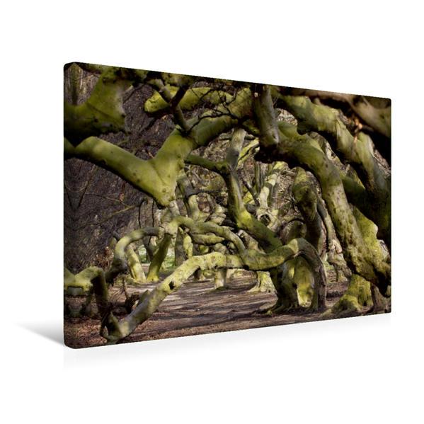 Premium Textil-Leinwand 45 cm x 30 cm quer, Die Süntelbuchenallee von Bad Nenndorf im März | Wandbild, Bild auf Keilrahmen, Fertigbild auf echter Leinwand, Leinwanddruck - Coverbild