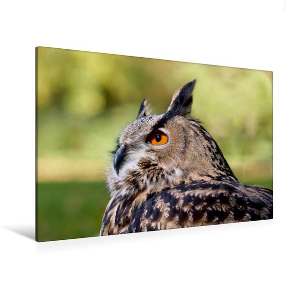 Premium Textil-Leinwand 120 cm x 80 cm quer, Uhu | Wandbild, Bild auf Keilrahmen, Fertigbild auf echter Leinwand, Leinwanddruck - Coverbild