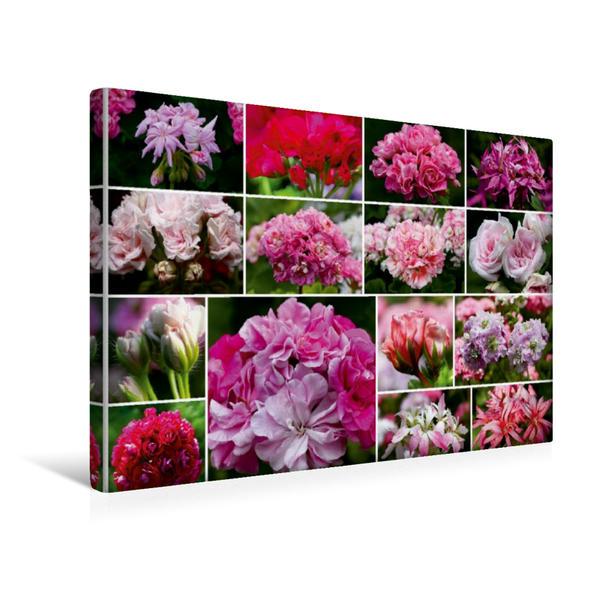 Premium Textil-Leinwand 45 cm x 30 cm quer, Pelargonien Collage   Wandbild, Bild auf Keilrahmen, Fertigbild auf echter Leinwand, Leinwanddruck - Coverbild