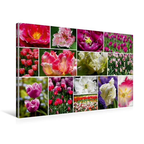 Premium Textil-Leinwand 75 cm x 50 cm quer, Tulpen Collage | Wandbild, Bild auf Keilrahmen, Fertigbild auf echter Leinwand, Leinwanddruck - Coverbild