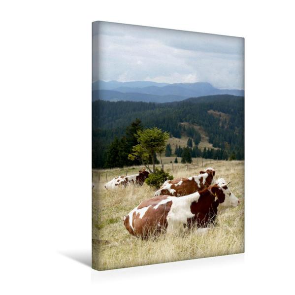 Premium Textil-Leinwand 30 cm x 45 cm hoch, Blick zum Belchen und Fleckvieh beim Wiederkäuen | Wandbild, Bild auf Keilrahmen, Fertigbild auf echter Leinwand, Leinwanddruck - Coverbild