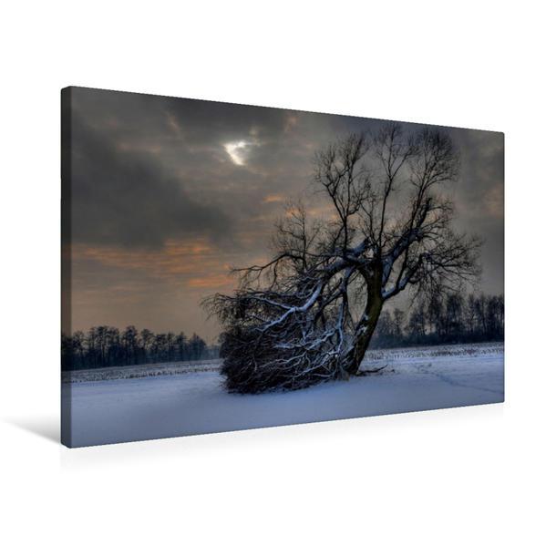 Premium Textil-Leinwand 75 cm x 50 cm quer, gebrochener Baum (Bubach) | Wandbild, Bild auf Keilrahmen, Fertigbild auf echter Leinwand, Leinwanddruck - Coverbild