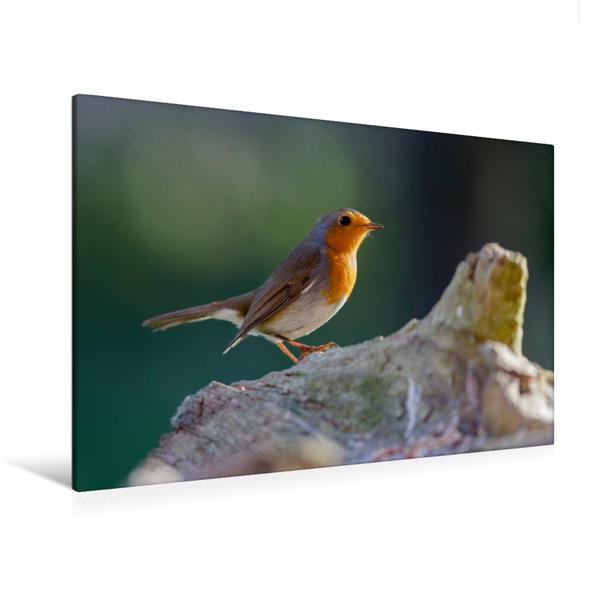Premium Textil-Leinwand 120 cm x 80 cm quer, Schönes Rotkehlchen im Sonnenlicht   Wandbild, Bild auf Keilrahmen, Fertigbild auf echter Leinwand, Leinwanddruck - Coverbild