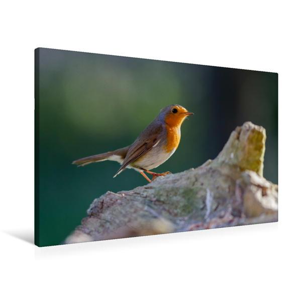 Premium Textil-Leinwand 90 cm x 60 cm quer, Schönes Rotkehlchen im Sonnenlicht | Wandbild, Bild auf Keilrahmen, Fertigbild auf echter Leinwand, Leinwanddruck - Coverbild