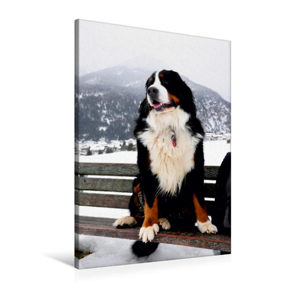 Premium Textil-Leinwand 60 cm x 90 cm hoch, Ein Motiv aus dem Kalender BÄR - Der Berner Sennenhund | Wandbild, Bild auf Keilrahmen, Fertigbild auf echter Leinwand, Leinwanddruck - Coverbild