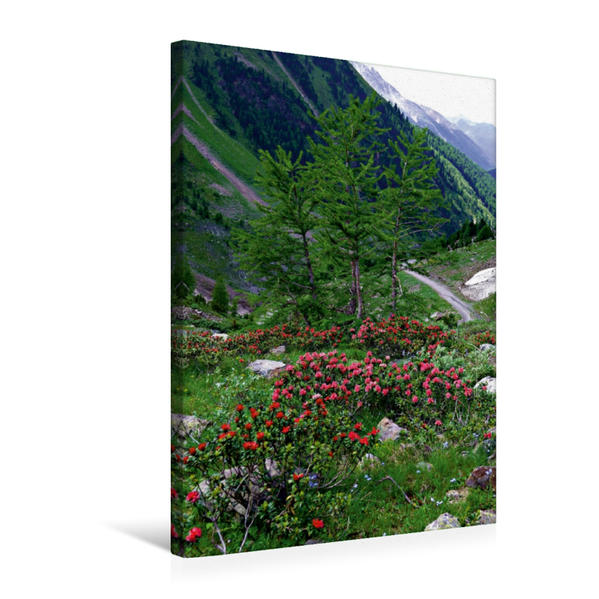 Premium Textil-Leinwand 50 cm x 75 cm hoch, Alpenrosenblüte im Razoital | Wandbild, Bild auf Keilrahmen, Fertigbild auf echter Leinwand, Leinwanddruck - Coverbild