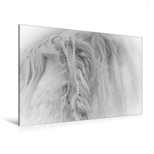 Premium Textil-Leinwand 120 cm x 80 cm quer, Ein Motiv aus dem Kalender Emotionale Momente: Weiße Pferde in schwarzweiß. | Wandbild, Bild auf Keilrahmen, Fertigbild auf echter Leinwand, Leinwanddruck - Coverbild