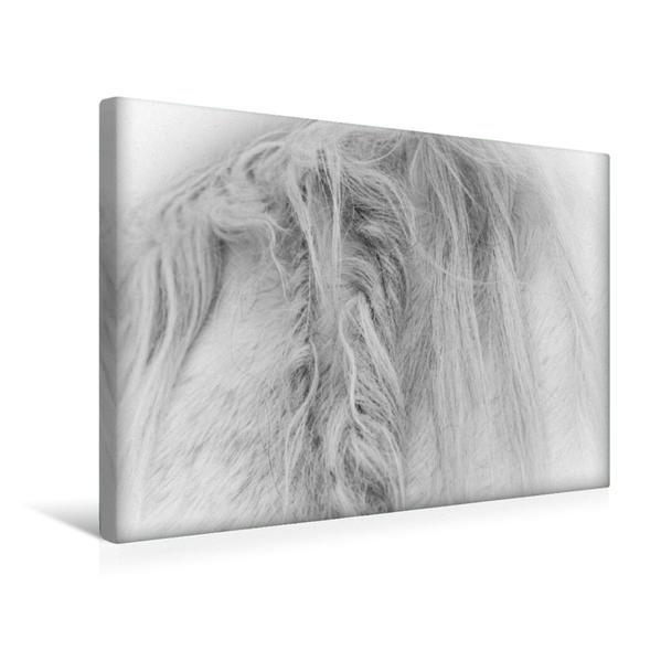 Premium Textil-Leinwand 45 cm x 30 cm quer, Ein Motiv aus dem Kalender Emotionale Momente: Weiße Pferde in schwarzweiß.   Wandbild, Bild auf Keilrahmen, Fertigbild auf echter Leinwand, Leinwanddruck - Coverbild