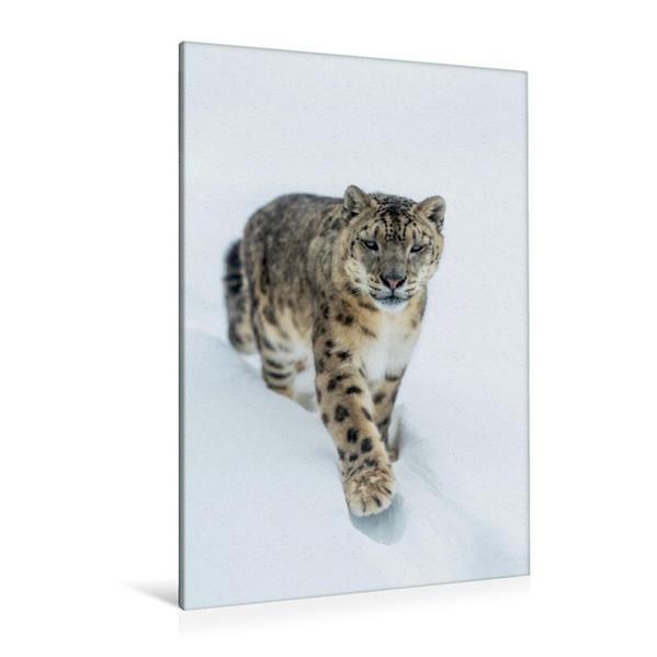 Premium Textil-Leinwand 80 cm x 120 cm  hoch, Schneeleopard | Wandbild, Bild auf Keilrahmen, Fertigbild auf echter Leinwand, Leinwanddruck - Coverbild