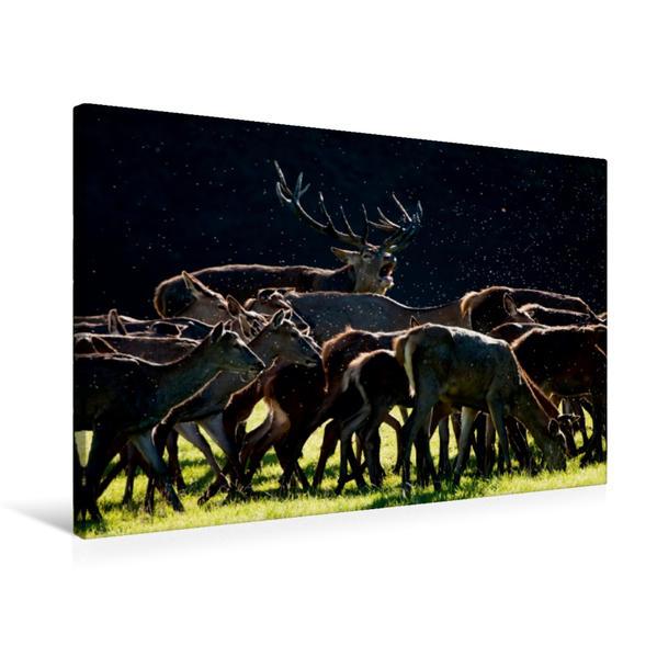 Premium Textil-Leinwand 75 cm x 50 cm quer, Ein Motiv aus dem Kalender Emotionale Momente: Hirschbrunft. Part III.   Wandbild, Bild auf Keilrahmen, Fertigbild auf echter Leinwand, Leinwanddruck - Coverbild