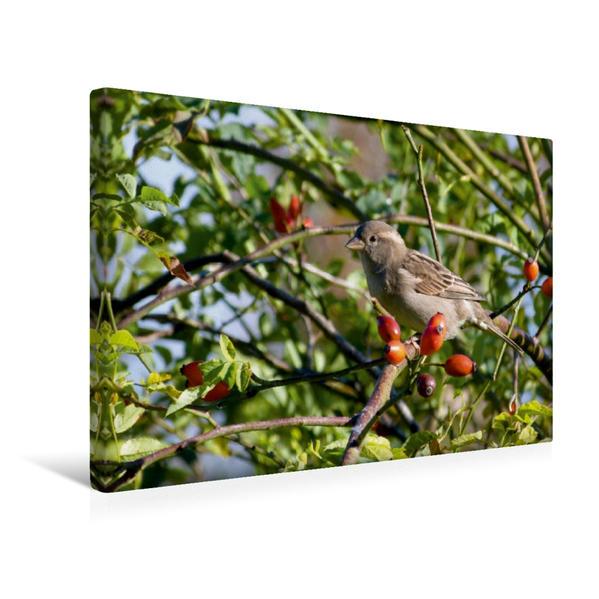 Premium Textil-Leinwand 45 cm x 30 cm quer, Vogel im Hagebuttenstrauch | Wandbild, Bild auf Keilrahmen, Fertigbild auf echter Leinwand, Leinwanddruck - Coverbild