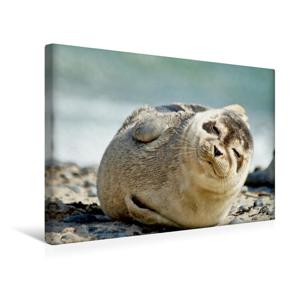 Premium Textil-Leinwand 45 cm x 30 cm quer, Nickerchen | Wandbild, Bild auf Keilrahmen, Fertigbild auf echter Leinwand, Leinwanddruck - Coverbild