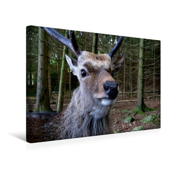 Premium Textil-Leinwand 45 cm x 30 cm quer, Hirsch | Wandbild, Bild auf Keilrahmen, Fertigbild auf echter Leinwand, Leinwanddruck - Coverbild